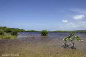 Manatee Bay wetlands - Evert Henningheim