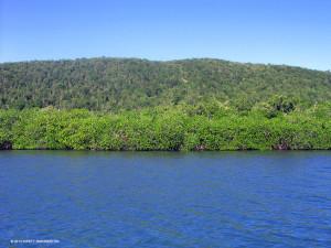 Healthy mangroves along the eastern coast of Great Goat Island - Kirsty Swinnerton