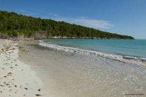 Eastern side of Manatee Bay, Hellshire - Kirsten Hines
