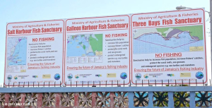 Protection of the Fish Sanctuaries in the PBPA provide critical nurseries and ensure our future for fishing - Max Earle