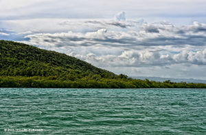 Great Goat Island is lush with dry tropical forest plants - Ted Lee Eubanks